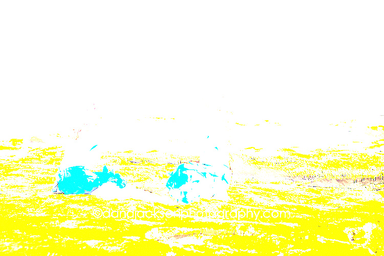 beach_mermaid_kids_photo_04.jpg