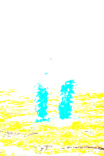 beach_mermaid_kids_photo_11.jpg